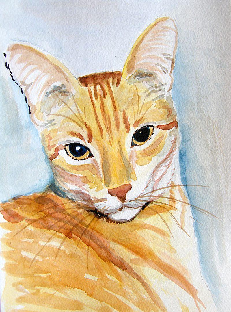 Kot w rysunku i akwareli
