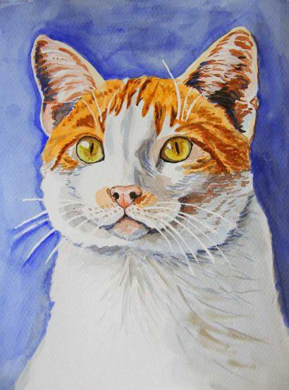 Portret kota Słoneczko