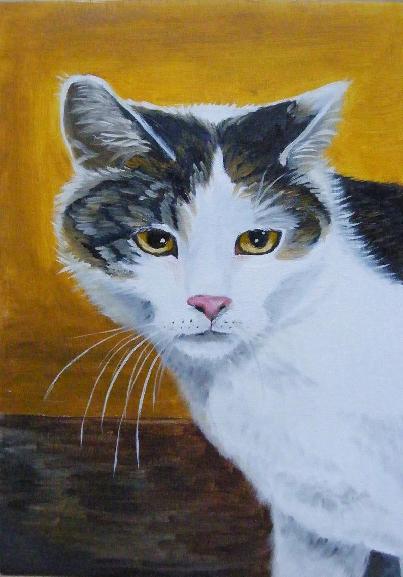 bialka - obraz olejny portret kota  Małgorzata Jaskłowska