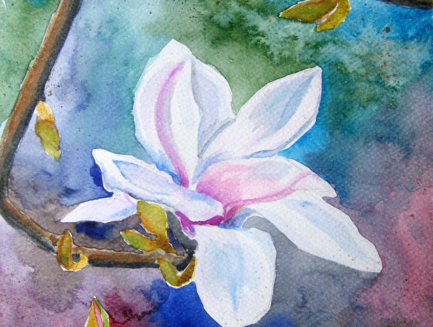 Magnolia - akwarela Małgorzata Jaskłowska