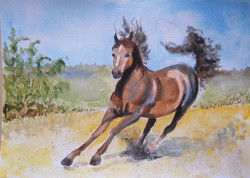 Koń - akwarela Małgorzata Jaskłowska