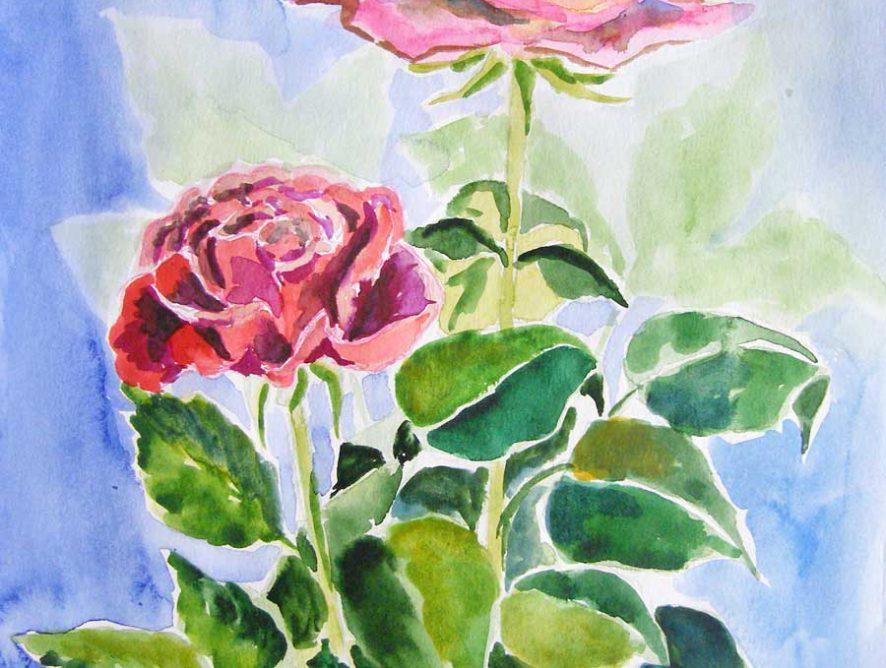 akwarela róże małgorzata jaskłowska