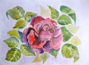 akwarela róża małgorzata jaskłowska