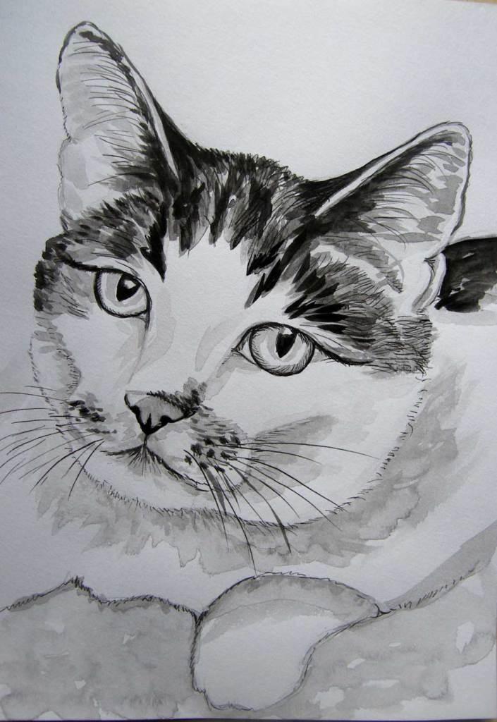 rysunek tuszem - kot