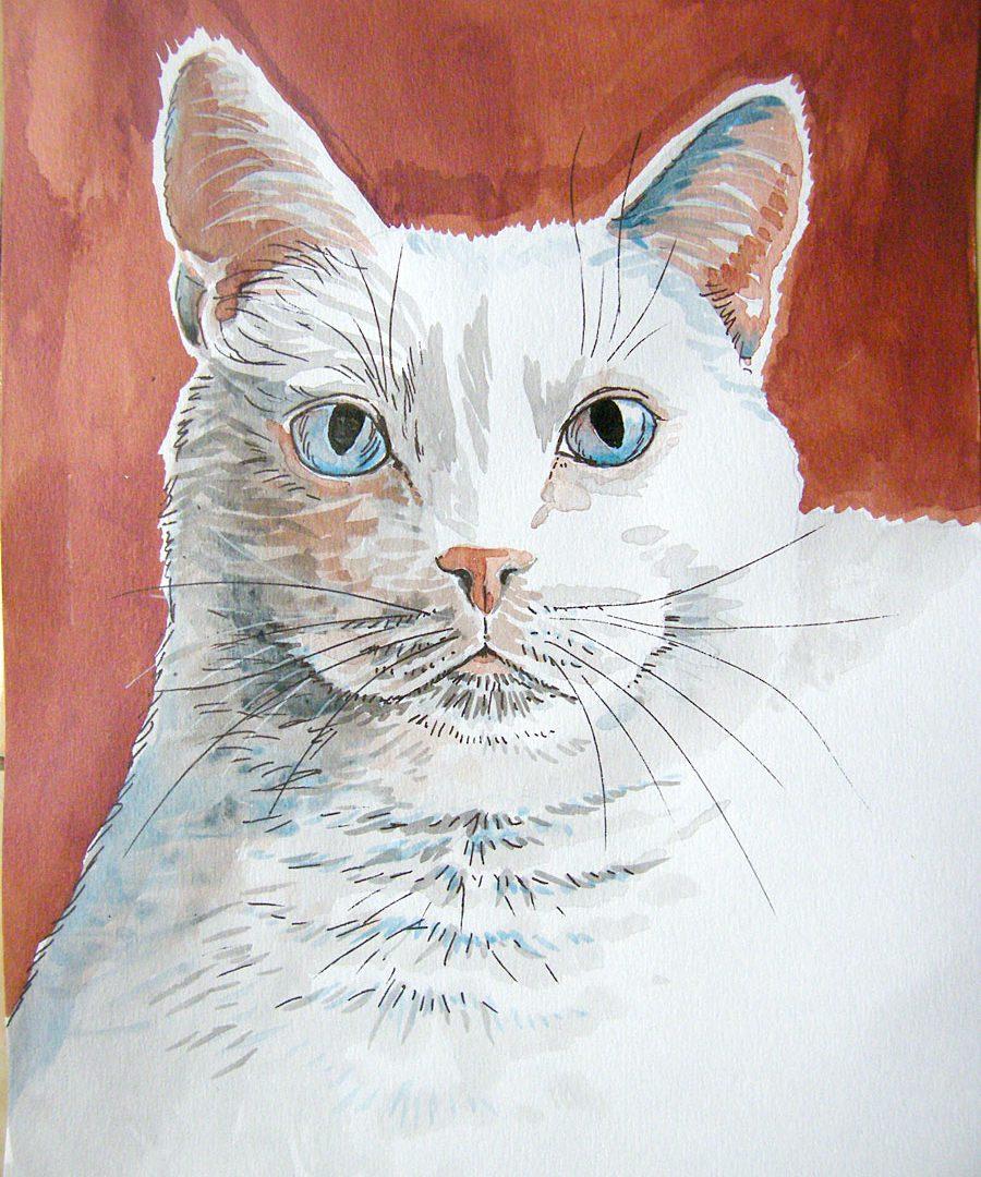 Tuszowe koty