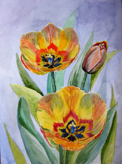 akwarela tulipany
