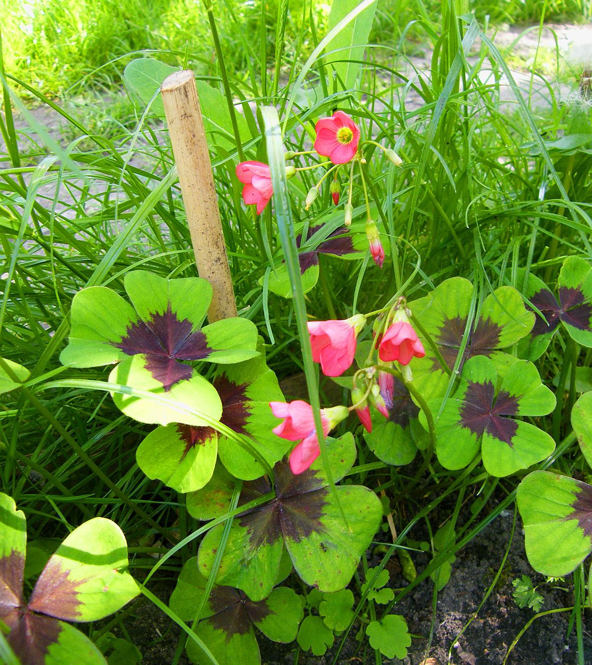 Przyszła Wiosna I Czas Na Mlecze I Tulipany Malarstwo Rysunek