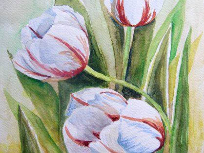 akwarela kwiaty tulipany - małgorzata Jaskłowska