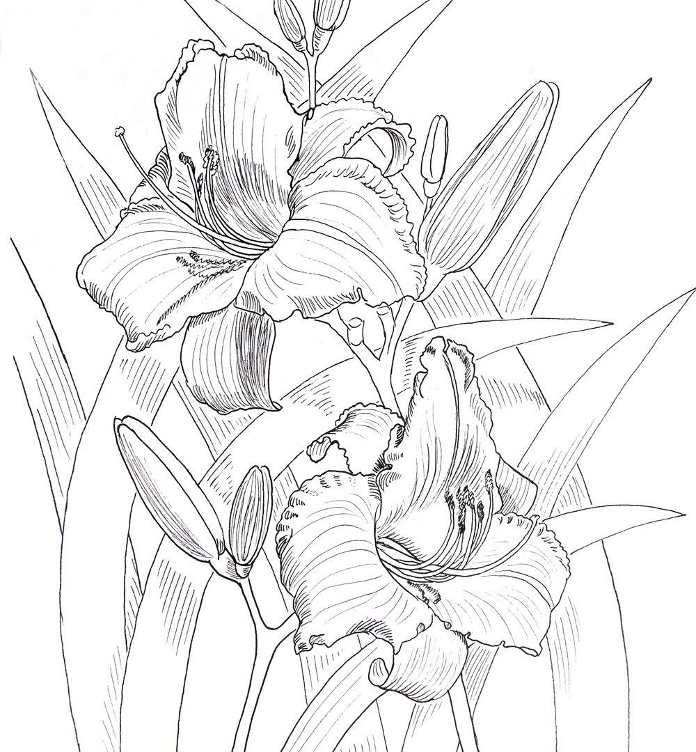 Kwiaty outline