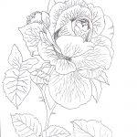rysunek róża, kwiaty rysunek do kolorowania, flower outline