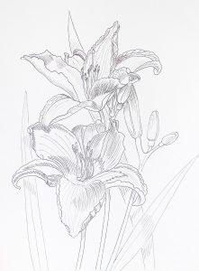 kwiaty rysunek do kolorowania, flower outline