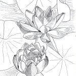 rysunek tuszem kwiaty